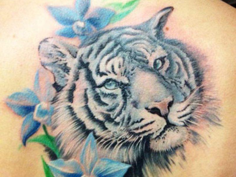 Фото эскиз тату тигра 17
